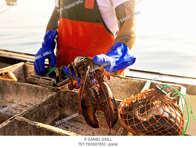 Fisherman holding lobster