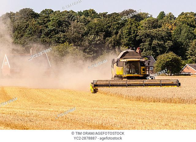 A New Holland combine harvester cutting corn in a field in Norfolk , England , Britain , Uk