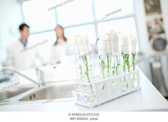 Laboratory, Plants in test tubes