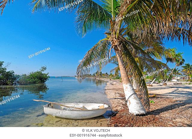 Picture of a palm tree on the beach of Mahahual in Mexico