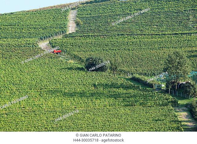Italy, panorama of vineyards of Piedmont Langhe-Roero and Monferrato on the World Heritage List UNESCO. Italy, Piedmont, Vineyards