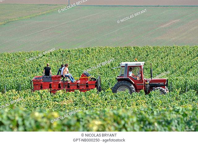 TRACTOR CARRYING HARVESTERS AND CRATES OF GRAPES, HAND HARVEST IN CHAMPAGNE, ESSOMES-SUR-MARNE, AISNE 02, FRANCE