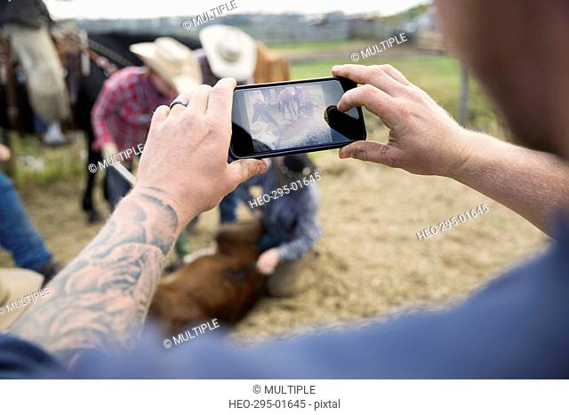 Cattle rancher photographing cow branding with camera phone