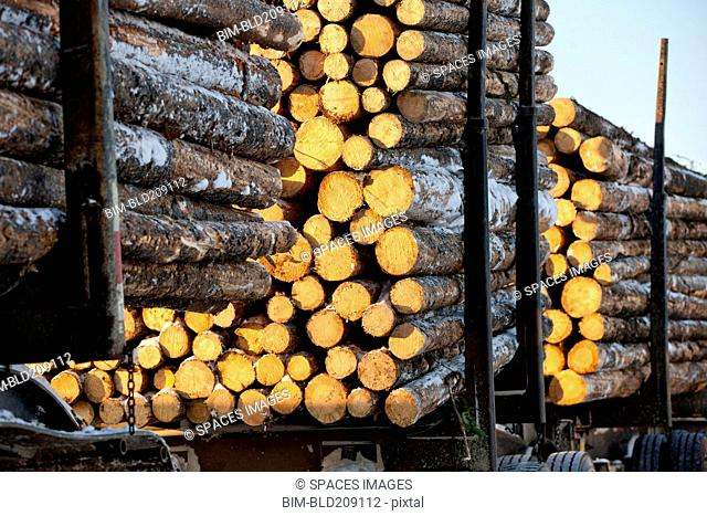 Logging truck pulling fresh cut logs