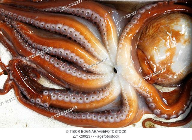 South Korea, Seoul, Noryangjin Fish Market, octopus,