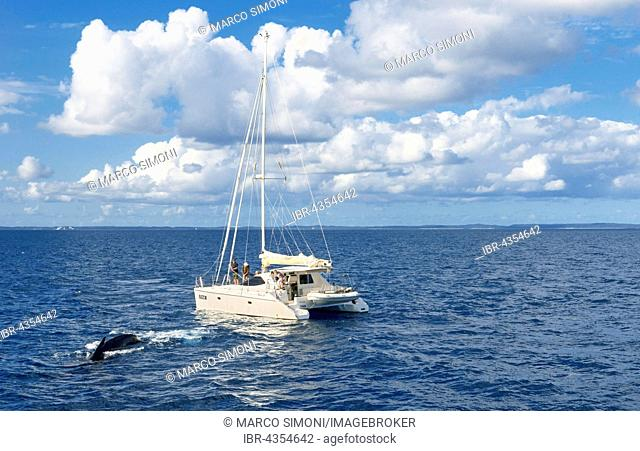 People on sailing boat watching Humpback whales (Megaptera novaeangliae), Hervey Bay, Queensland, Australia