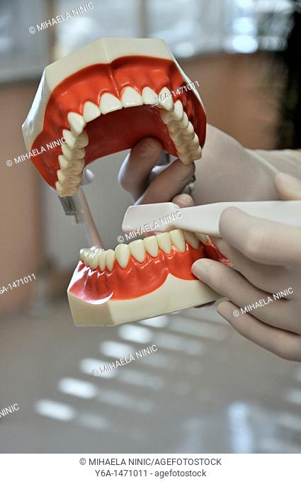 Male dentist holding model of teeth and toothbrush
