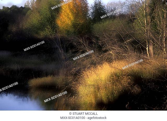 Autumn beside river, near Duncan, Vancouver Island, British Columbia, Canada