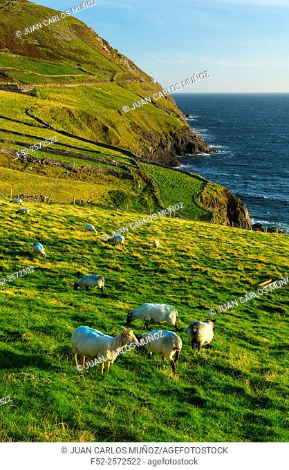 Slea Head, Dingle Peninsula, County Kerry, Ireland, Europe