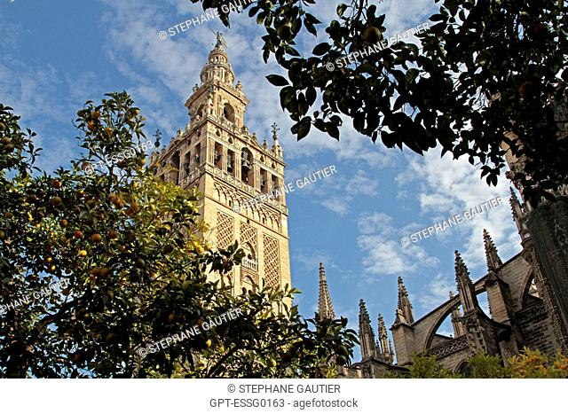 THE GIRALDA, MOORISH TOWER OF THE OLD GREAT MOSQUE DATING FROM THE 12TH CENTURY, SEVILLE, ANDALUSIA, SPAIN