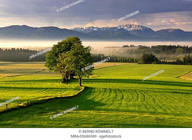 Germany, Bavaria, Upper Bavaria, Tölzer country, Faistenberg, view at Zwiesel, Benediktenwand, Bavarian Alpine foothills