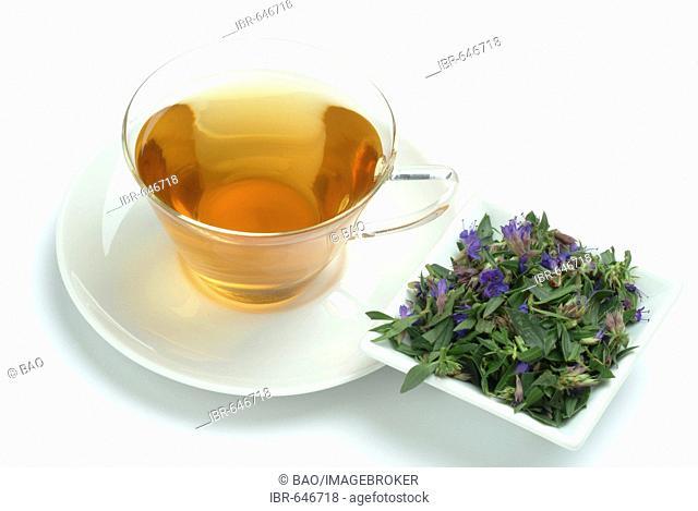 Herb Hyssop (Hyssopus officinalis), herbal tea