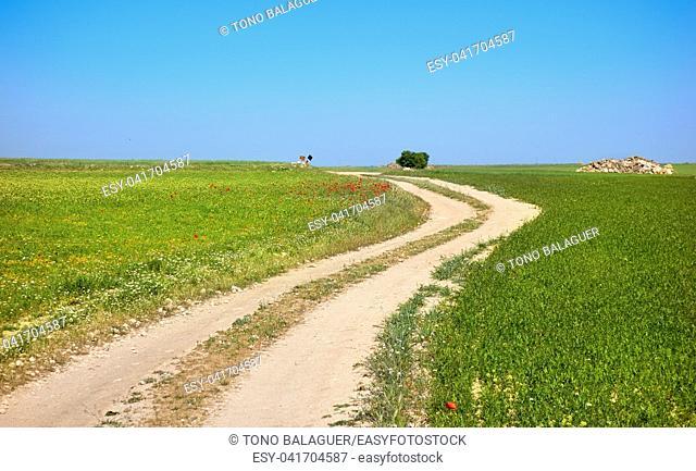 Castile La Mancha Camino de Santiago saint James Way of Levante