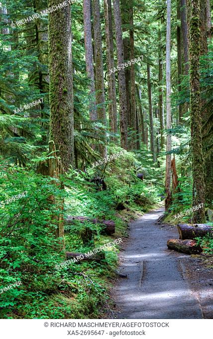 Trial to Sol Duc Falls, Rain Forest, Olympic National Park, Washington State, USA