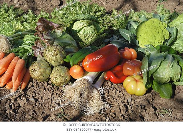 vegetables in the garden with daylight