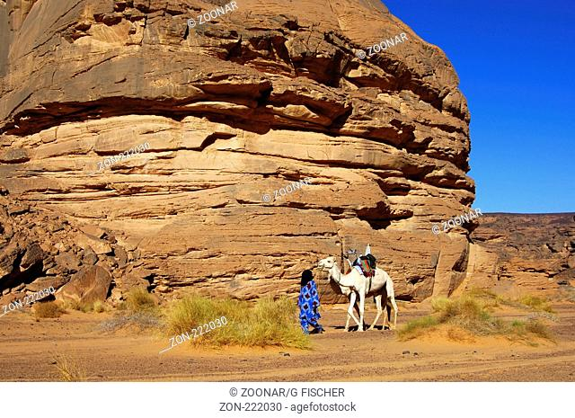 Tuareg mit weissem Reitkamel Mehari, Akakus Gebirge, Libyen / Tuareg with white Mehari riding dromedary, Acacus Mountains, Libya