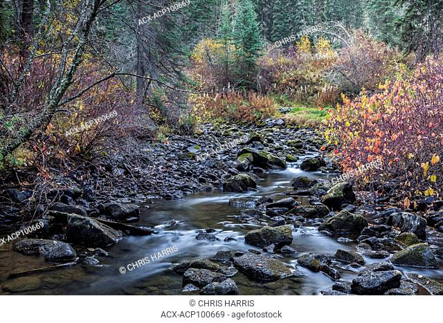 Canada, British Columbia, Cariboo region, Bridge Creek, Centennial Park, 100 Mile House, fall colours