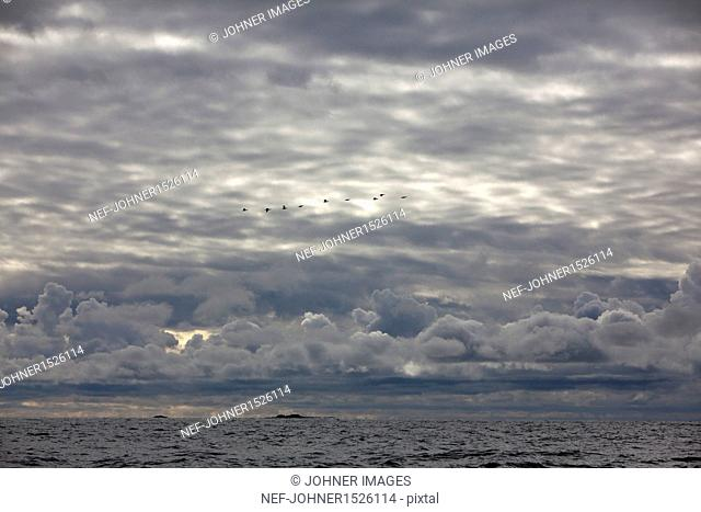 Clouds and flying cormorants over sea
