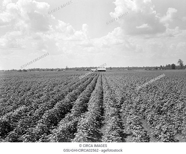 Delta Plantation Landscape, near Wilson, Arkansas, USA, Dorothea Lange for Farm Security Administration, August 1938