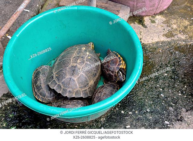 Live turtles in a food stall in a market, Lopburi, Thailand, Asia