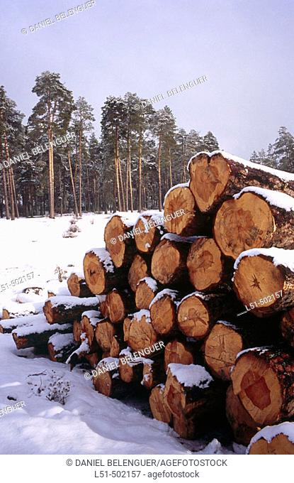 Stack of logs in snow. Serrania de Cuenca. Castilla La Mancha. Spain