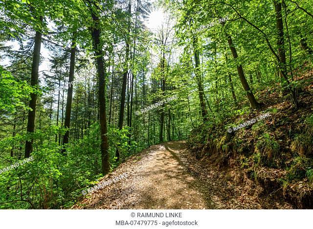 Forest path with sun in spring, Castle Lindelbrunn, Vorderweidenthal, Pfälzerwald, Südliche Weinstraße District, Rhineland-Palatinate, Germany