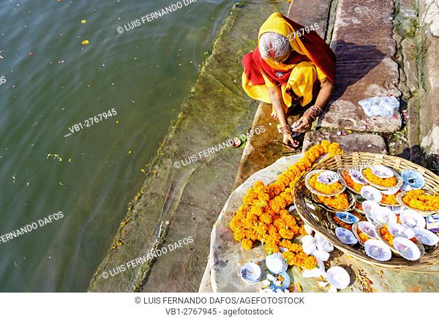 An old woman in colourful sari prepares a puja by the Ganges river in Varanasi, Uttar Pradesh, India, Asia