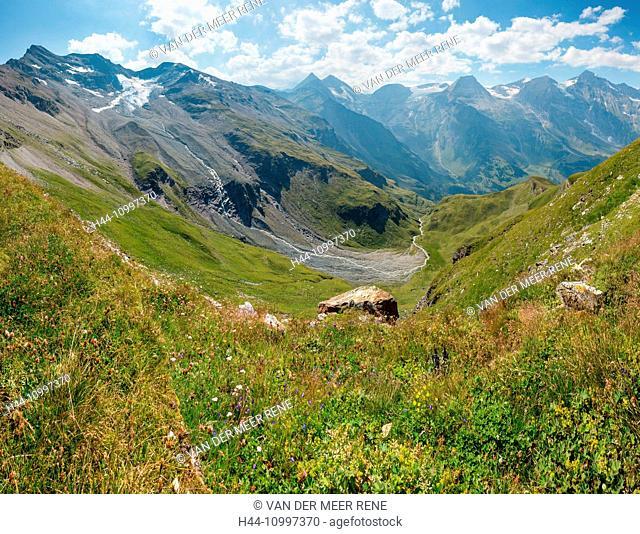Ferleiten, Austria, Grossglockner High Alpine Road, alpine meadow