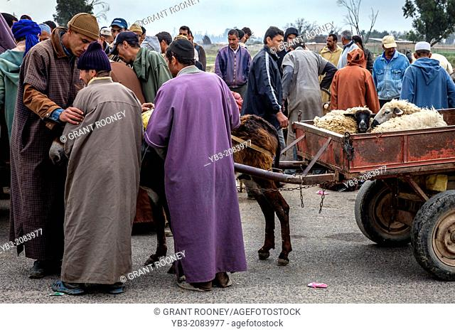 The Weekly Livestock Market, Taroudant, Morocco