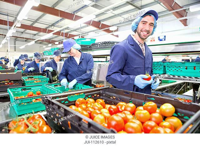 Portrait smiling worker packing ripe red tomatoes on production line in food processing plant