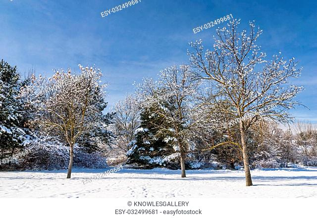 Trees with snow on them in a park with bluse sky