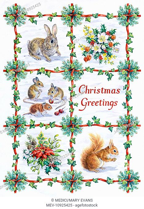 Rabbit, mice and red squirrel in the snow, with sprays of Christmas roses, holly, winter jasmine, mistletoe and poinsettia – in a trellis of red ribbon and ivy...