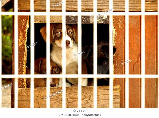 Three little puppies behind bars in a dog shelter. One is sitting, two are lying on the floor of a small doggie house