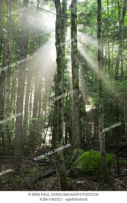 Pemigewasset Wilderness - The sun breaks through the forest along the Wilderness Trail  Located in Lincoln, New Hampshire USA