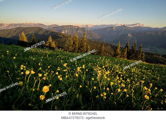 Evening mood on Hörnle with view to Zugspitze, close Murnau, Ammergau Alps, Upper Bavaria, Bavaria, Germany