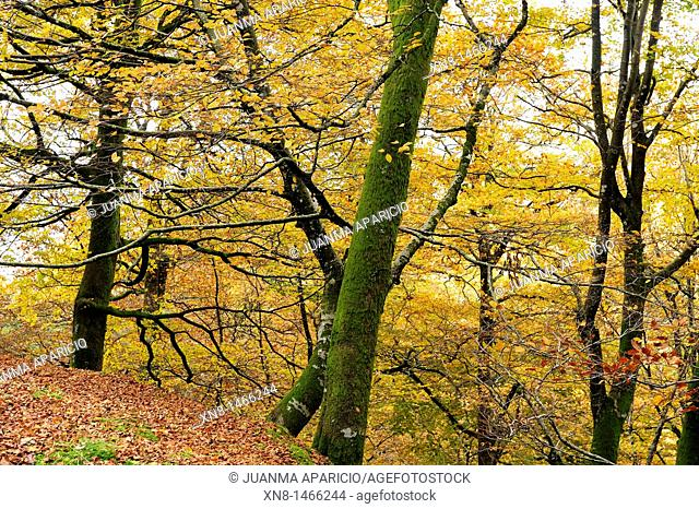 Located in a Orabidea is wooded area north of Navarre near the French border Baztan