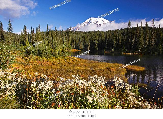 autumn colors at reflection lake and mount rainier in the background in mt. rainier national park, washington, united states of america