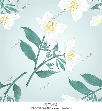 Seamless texture Twig jasmine flowers with leaves vector illustration