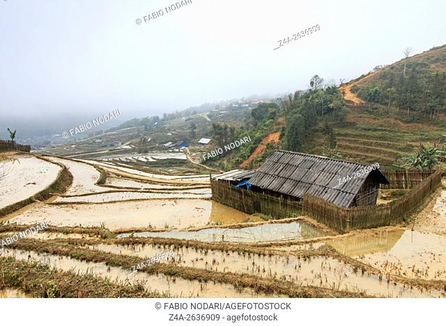 Isolated house among the rice terraces of Sapa in north Vietnam