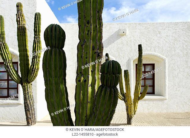The saguaro scientific name Carnegiea gigantea is a large, tree-sized cactus species in the monotypic genus Carnegiea. Las Ventanas Al Paraiso hotel