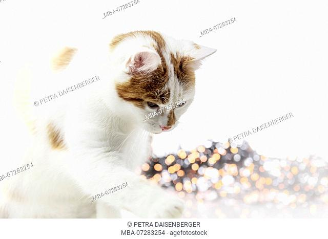 A cat playing with a Christmas ball