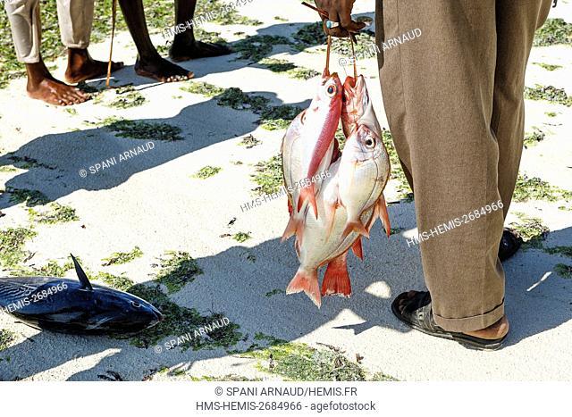 Tanzania, Zanzibar, Nungwi, results of the day's catch on the sand
