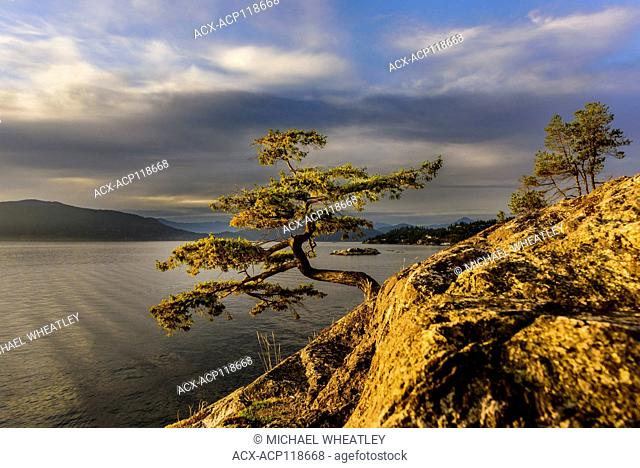 Tree at Juniper Point, Lighthouse Park, West Vancouver, British Columbia, Canada