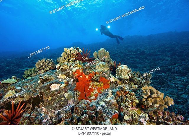 Molokini crater, Maui, Hawaii, USA, a single scuba diver