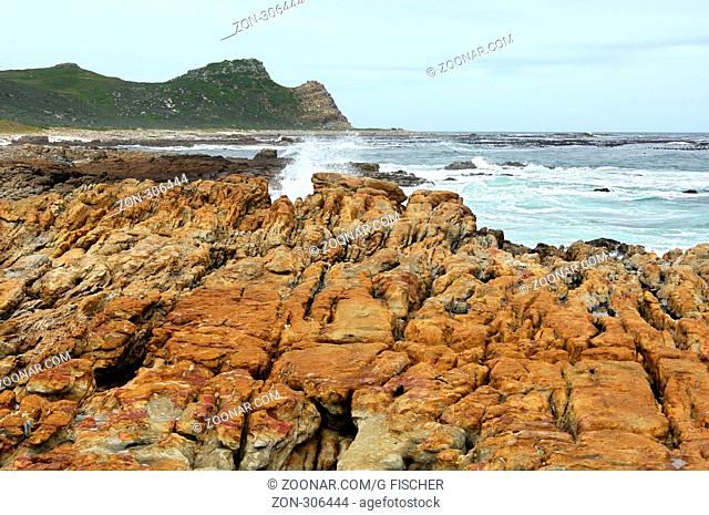 Küstenlandschaft am Kap der Guten Hoffnung, Kap Naturreservat, Südafrika / Coastal scenery at the Cape of Good Hope, Cape Point Nature Reserve, South Africa
