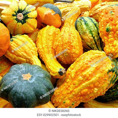 A nice selection of gourds to decorate the table for Thanksgiving