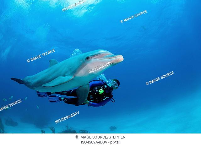 Diver with dolphin