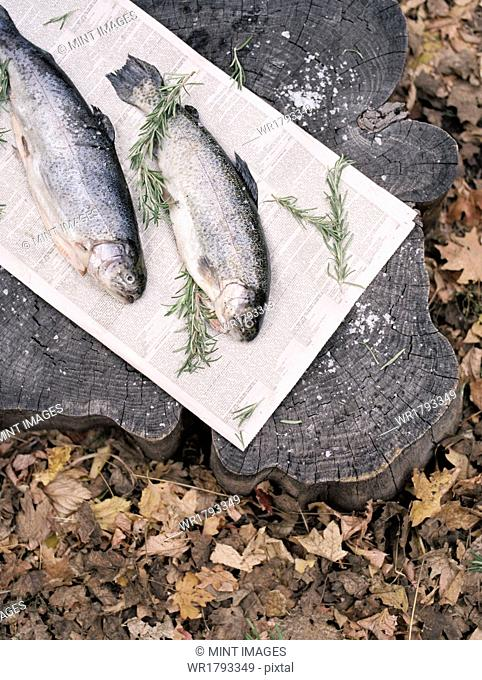 Two fresh fish lying on a tree trunk