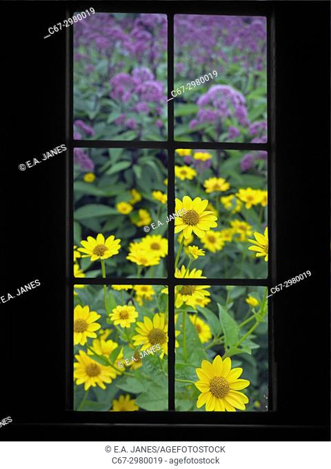 View through a window onto a colourful flower bed in summer