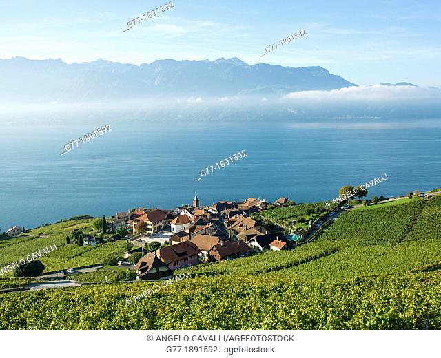 Switzerland  Canton Vaud  Montreux  Lavaux Vineyards